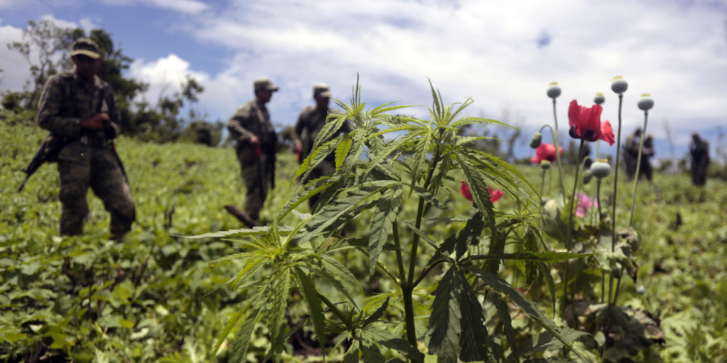 Mexican soldiers stand amidst poppy flowers and marijuana plants during an operation at Petatlan hills in Guerrero state, Mexico on August 28, 2013. Mexico is being whipped by a drug cartels war disputing their place and the trafficking to the United States with unusual ferocity and sophisticated wepaons. AFP PHOTO/Pedro Pardo (Photo credit should read Pedro PARDO/AFP/Getty Images)